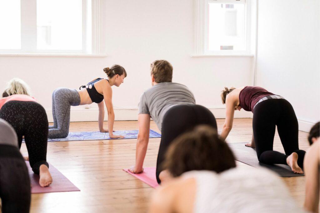 salaire professeur de yoga dog